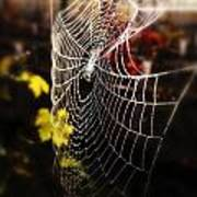 Autumn Web Art Print