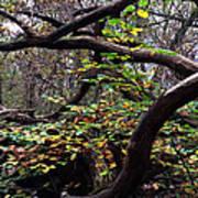 Autumn Wild Nature Denmark Art Print