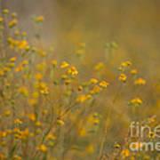 Autumn Wildflowers  Art Print