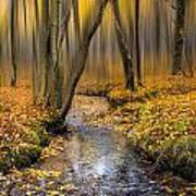 Autumn Woodland Print by Ian Hufton