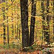 Autumn Woods 1 Art Print