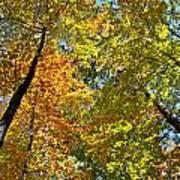 Autumn Woods Sky View Art Print