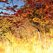Autumnal Fire Art Print by James Hammen