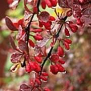 Autumnal Little Wonders_2 Art Print