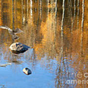 Autumnal Reflections Art Print