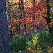 Autumnal Rock Art Print