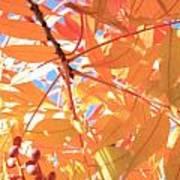 Autumn's Array 24 Art Print