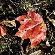 Autumns End Art Print by JAMART Photography