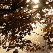 Autumns Golden Morning Art Print