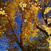 Autumns Reflections Print by Steven Milner