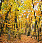 Autumn's Splendor Art Print