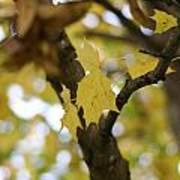 Autumn's Wondrous Colors 1 Art Print