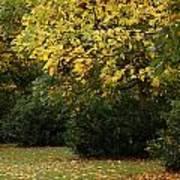 Autumn's Wondrous Colors 4 Art Print