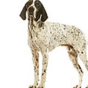 Auvergne Pointer Art Print