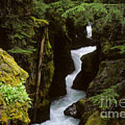Avalanche Creek Glacier National Park Art Print