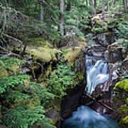Avalanche Creek In Cedar Forest Art Print