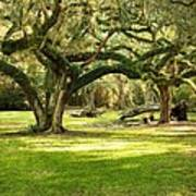 Avery Island Oaks Art Print
