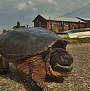 Avon Harbor Large Turtle 1 6/07 Art Print