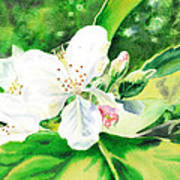 Awesome Apple Blossoms Art Print