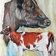 Ayrshire Cattle Art Print