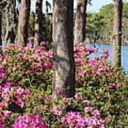 Azalea At The Lake Art Print