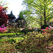 Azalea Garden Art Print