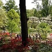 Azaleas Us National Arboretum Art Print