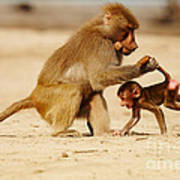 Baboon With Baby Art Print