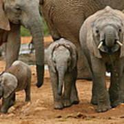 Baby African Elephants II Art Print