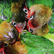 Baby Bird Nest In Hong Kong Bird Market Art Print