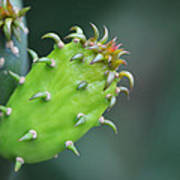 Baby Cactus - Macro Photography By Sharon Cummings Art Print