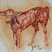 Baby Calf Art Print by Deborah Gorga