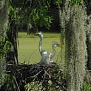 Baby Egrets Art Print