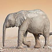 Baby Elephant  Art Print by Johan Swanepoel