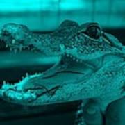 Baby Gator Turquoise Art Print