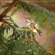 Baby Hummingbird In The Forest Art Print