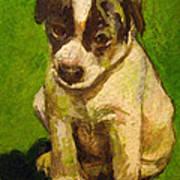 Baby Jack Russel Art Print