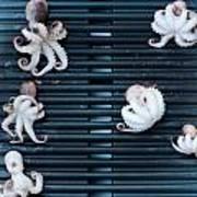Baby Octopus - Moscardini - On Bbq Art Print
