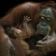 Baby Orangutan & Mother Art Print