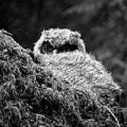 Baby Owl 3 Art Print