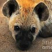 Baby Spotted Hyena Art Print