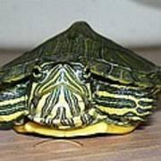Baby Turtle Straight On Art Print