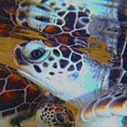 Baby Turtles Art Print