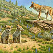 Babysitter  -  Coyotes Print by Paul Krapf