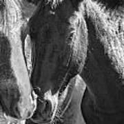 Bachelor Stallions - Pryor Mustangs - Bw Art Print