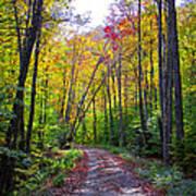 Back Road In The Adirondacks Art Print