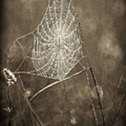 Backlit Spider Web In Sepia Tones Art Print