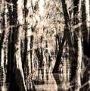 Backwater Cajun Country Art Print