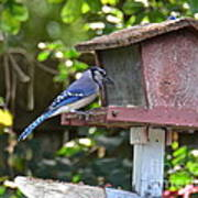 Backyard Bird Feeder Art Print