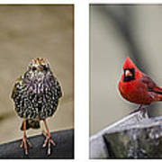 Backyard Bird Set Art Print
